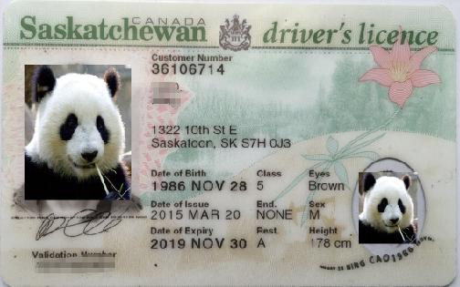 加拿大萨省驾照
